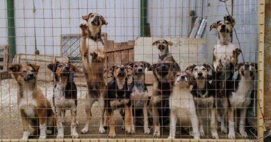 Собачья жизнь в Щечёнках