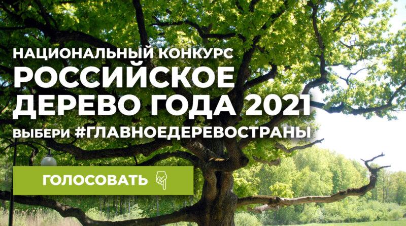 Смолян приглашают проголосовать во Всероссийском конкурсе «Российское дерево года»